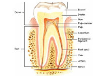 Endodontic Treatments